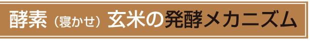 酵素(寝かせ)玄米の発酵メカニズム